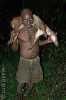 Pygmy hunter with a rainforest antelope
