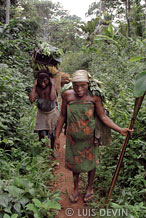 Hunter-gatherers in the rain forest