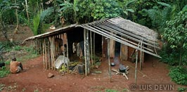 Pygmy house with mud walls