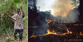 Slash-and-burn method in the rainforest of Central Africa