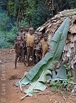 Leaf hut (Baka Pygmies, Cameroon)