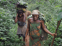 Gathering in the forest (Baka Pygmies, Cameroon)